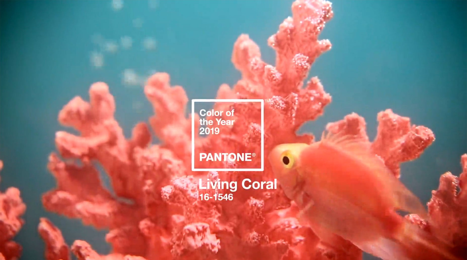 Living Coral is the new trend for the year 2019 – find now!